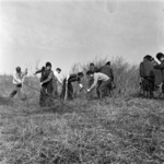 Apahida, cleaning the pasturage