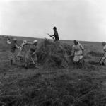 Transporting forage
