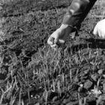 mezőgazdaság, melegágy