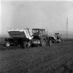 potato planting