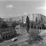 Calvaria