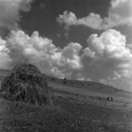 agriculture, harvest wheat, burrowing, collecting the hay, Gloria