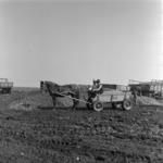 burgonya szállítás