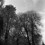 autumn in the park, Luţu