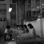 Üveggyár Torda