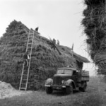 agriculture, silage
