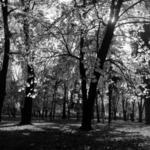 ősszel a parkban, Luţu