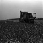 mezőgazdaság, aratás