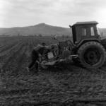 mezőgazdaság, kukorica vetés