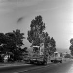 széna szállítás, kombájnok az úton, aratás