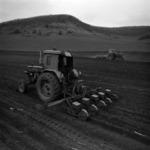 mezőgazdaság, kukorica vetés, Récekeresztúr