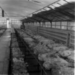 Mushroom farming