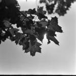 levelek ősszel, Grigorescu teleobjektívvel