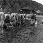 állattenyésztés Bánffyhunyad