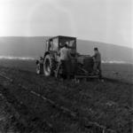 burgonya ültetés