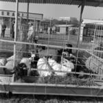 Animal exhibition 1984