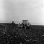 szántás Magyarkályán, Kötelend, kukorica szállítás