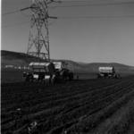 Gilău, planting potatoes