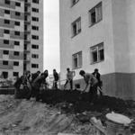 hazafias munka III - Lóhere ültetés