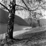 tájkép Tarnica