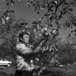 almaszedés