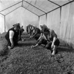zöldségtermesztés, vetés