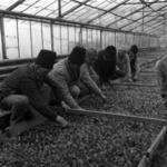 vetés, zöldségtermesztés