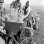 mezőgazdaság, burgonya ültetés, cékla, szántóföld előkészítése
