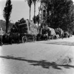 takarmány szállítása szekérrel