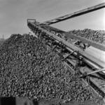 Transporting sugar-beet
