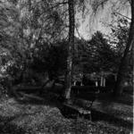 Botanikus kert ősszel