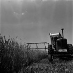 agriculture, harvest