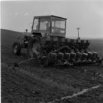 kukorica vetés tavasszal