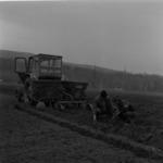 burgonya és sárgarépa ültetés