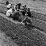 Măguri Răcătău, school, horticulture