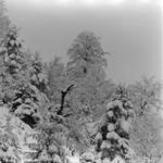 tájkép Béles/Jósikafalva télen