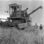 aratás árpa Szamosfalva