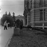 the horse at the library