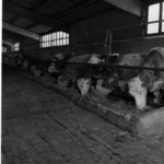 Tordatúr, állattenyésztés, új házak