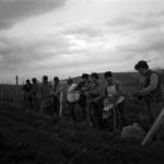 vinery, cuttings