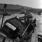 cukorrépa szállítása és lerakása