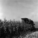 gépesített kukorica betakarítás