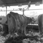 Animal exhibition 1984