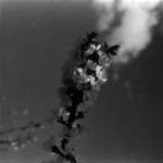 virágok, kajszibarack