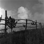 Făget landscape