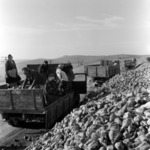 silage, reapers, beetroot transportation