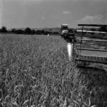 agriculture, harvest