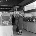 pet exhibition Peterfi