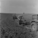 Turda, agriculture