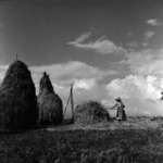 collecting, woman, hay